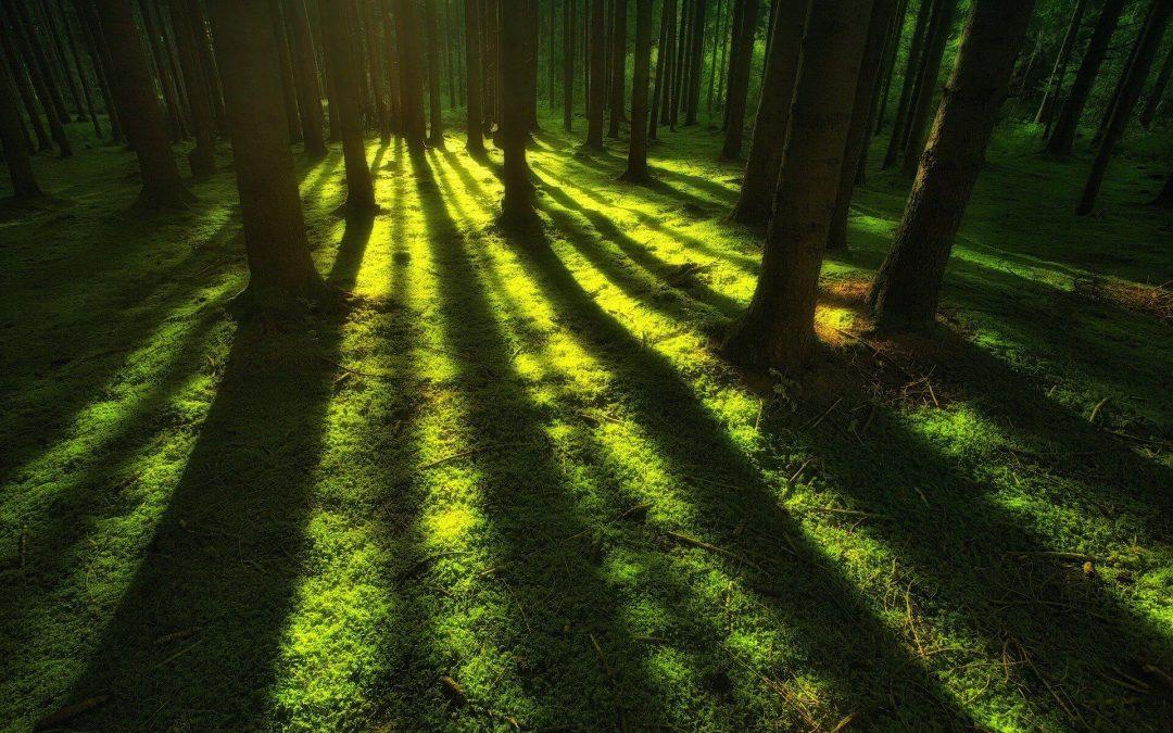 A fák árnyéka 5 (3)