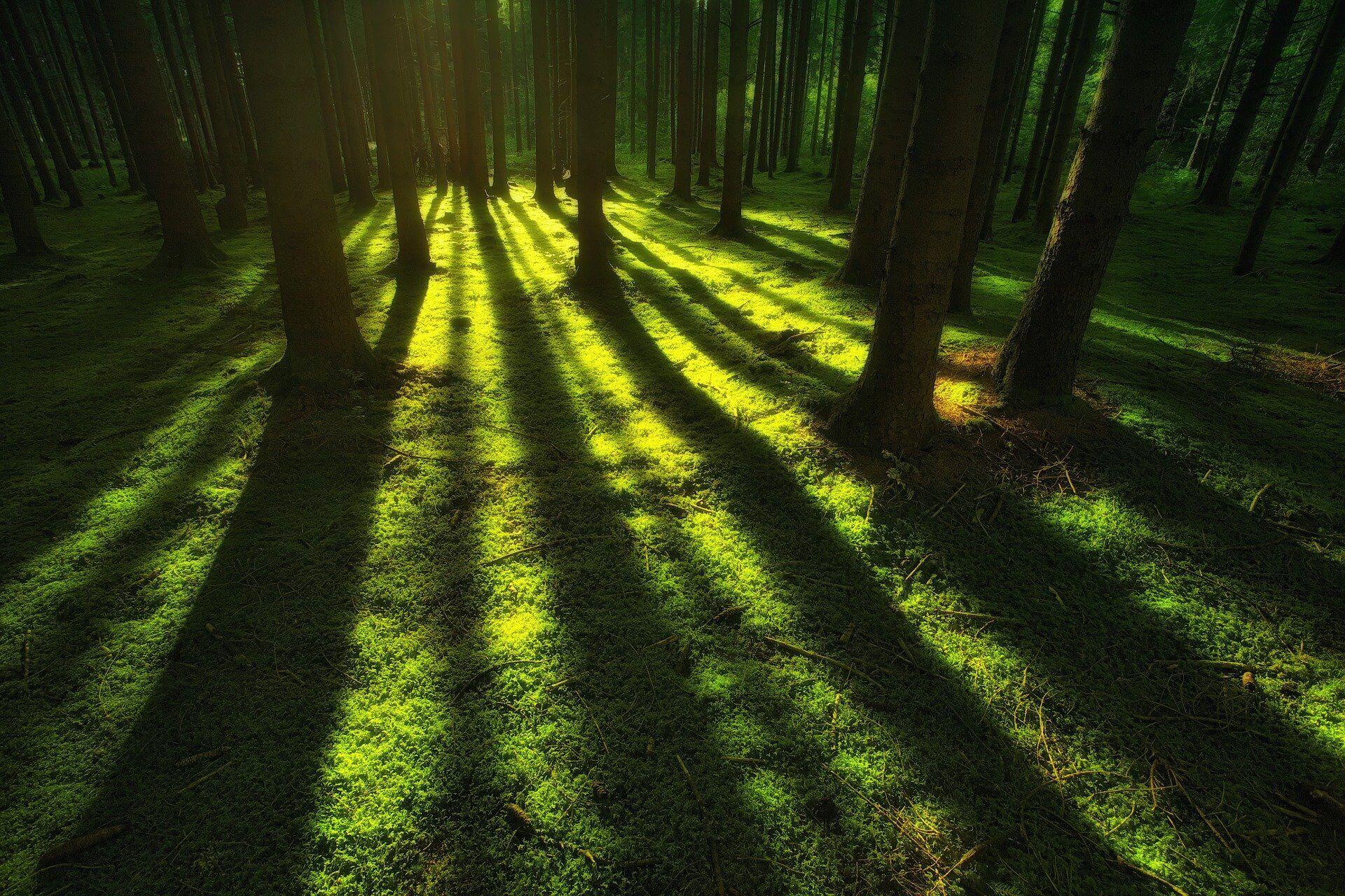 Erdei fák árnyéka