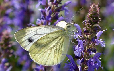 Gyakori rovarok a kertben 5 (1)