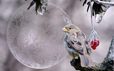 Téli madáretetés 5 (1)