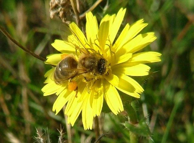 Permetezés IV. – Méhkímélő permetezés 5 (1)