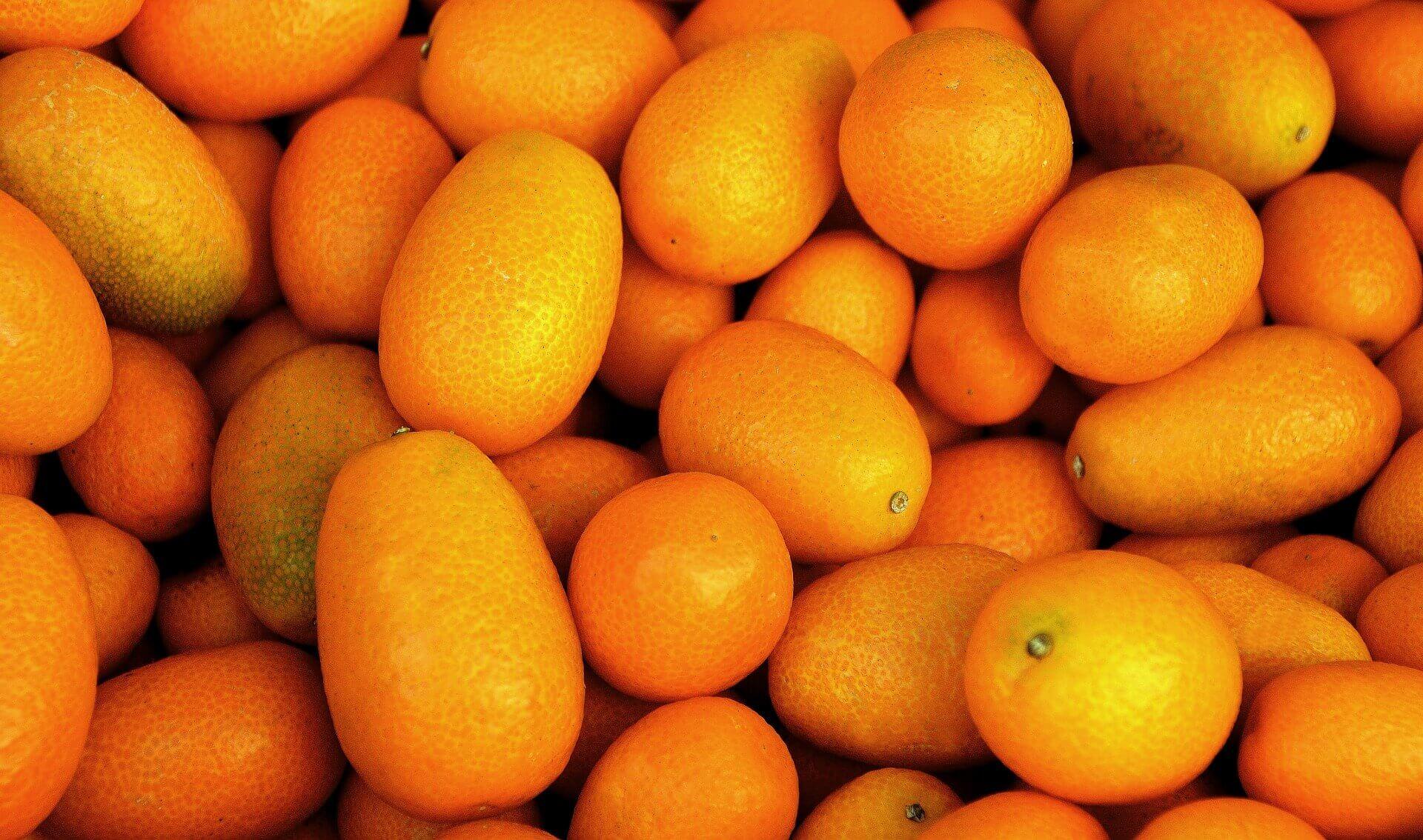 kumkvat citrus termések