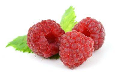 Málna (Rubus idaeus) termesztése 4.7 (3)